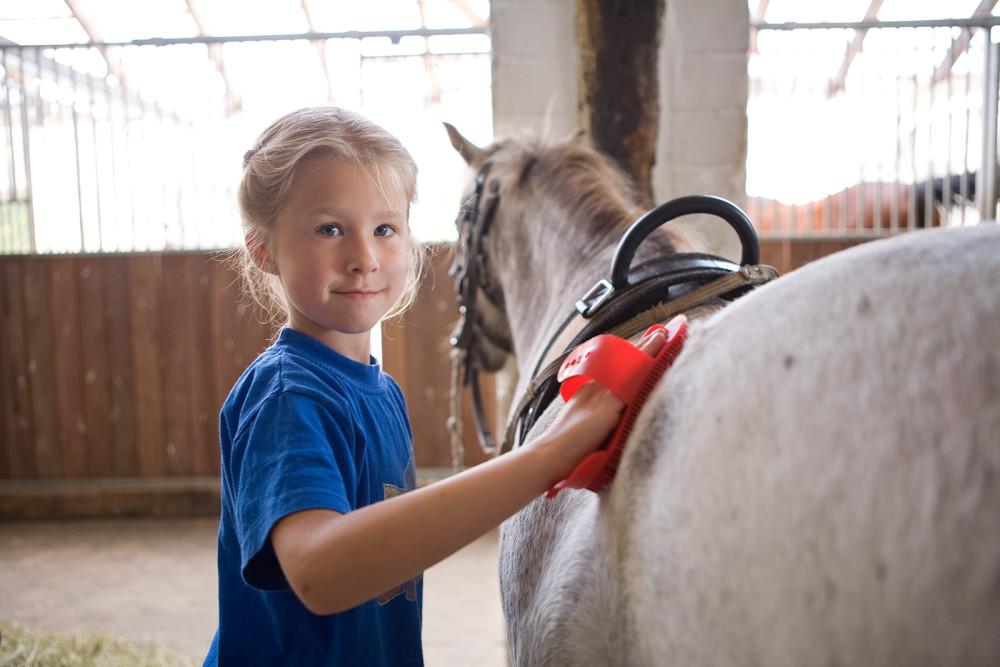 jenny hawkgarden zeigt ihre ganzen pferde